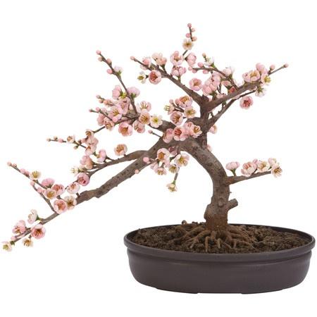 Silk pink cherry blossom bonsai plant.
