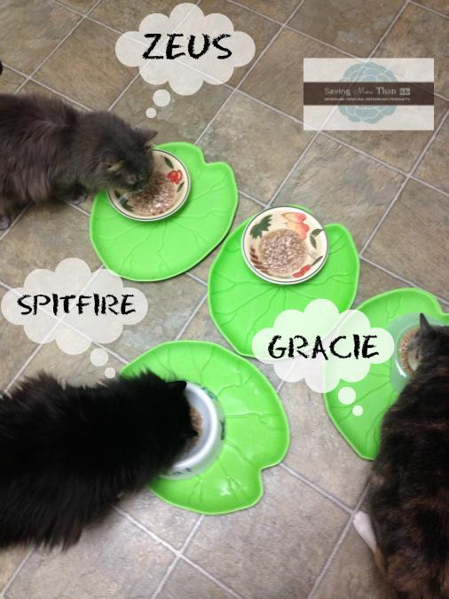 ZEUS, GRACIE AND SPITFIRE #truenatureofcats