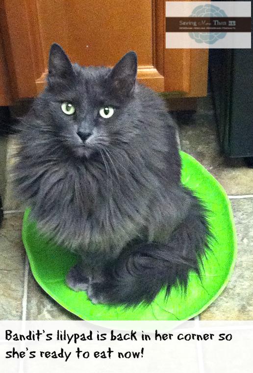 bandit on lilypad #truenatureofcats