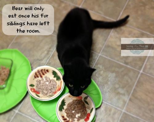 bear likes to eat alone #truenatureofcats