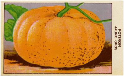 Pumpkin Seed Label Free Vintage Image