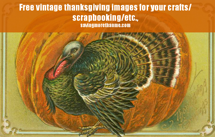 4 Vintage Thanksgiving Postcards- Turkeys and Auld Lang Syne winterandsparrow.com
