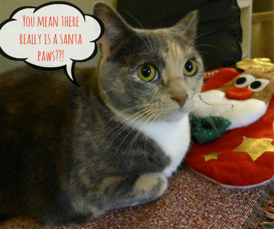 Yes Gracie there really is a santa paws. #HappyAllTheWay #shop #cbias