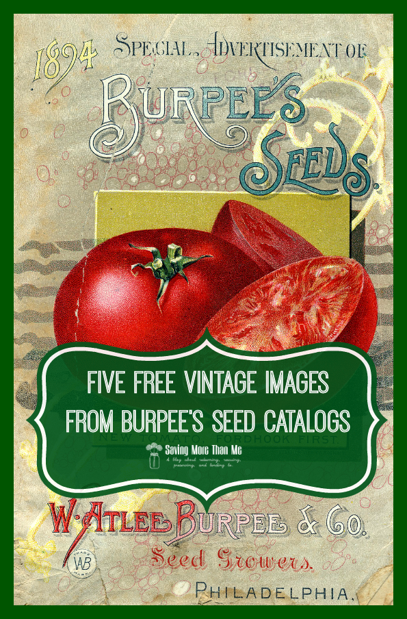 five free vintage images from seed catalogs