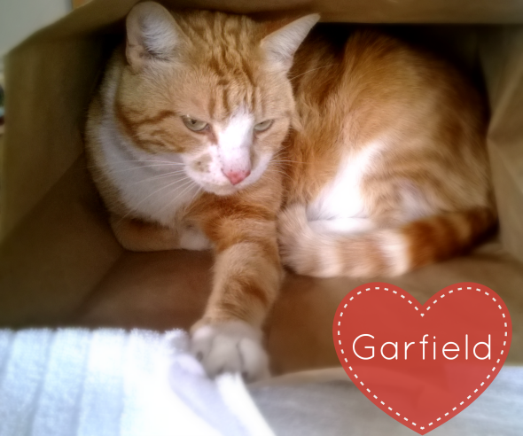 Garfield loves to sleep in a brown paper bag #RecipeForMoments #ad
