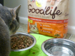 Gracie Deserves The Best Cat Food Possible {Read Her Adoption Story}