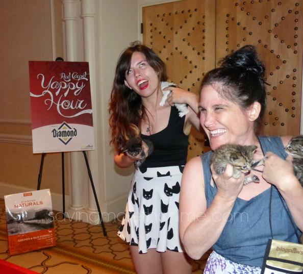 Cute kittens Yes please! #diamondnaturals #blogpaws savingmorethanme.com