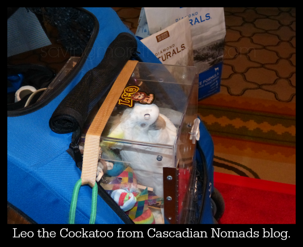 Leo the Cockatoo from Cascadian Nomads blog. #diamondnaturals #blogpaws savingmorethanme.com