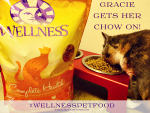 Gracie, Bandit, + Spitfire Eat Healthy Cat Food and Love It #WellnessPetFood #ad