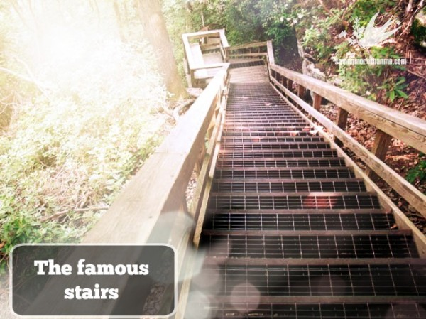 the famous stairs savingmorethanme.com--Getting Diagnosed With Multiple Sclerosis {A Series}: The Event That Triggered It All #CureMS savingmorethanme.com