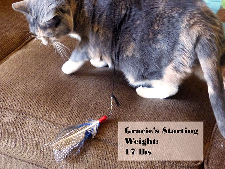Cat Weight Loss: Gracie Is 1.5lbs Lighter and Friskier