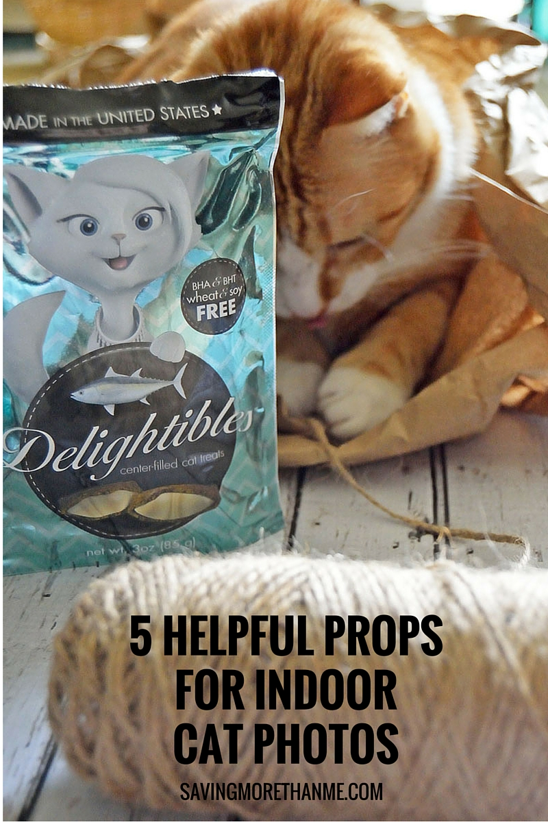 5 Helpful Props For Indoor Cat Photos