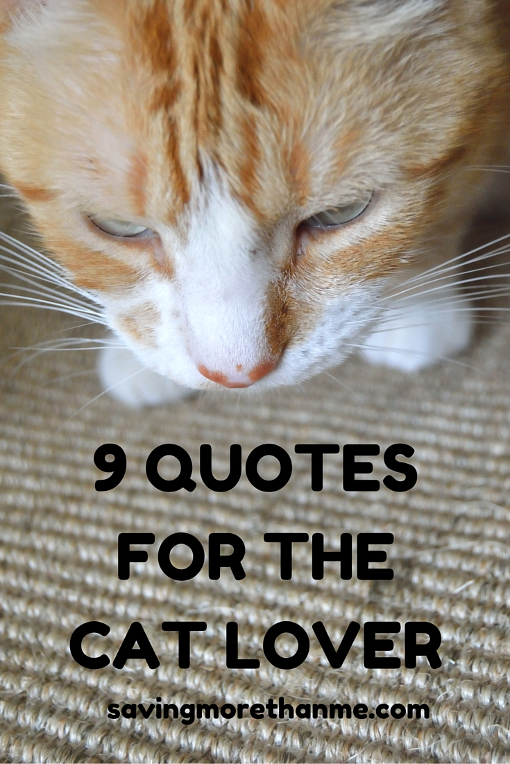 9 Quotes For The Cat Lover savingmorethanme.com
