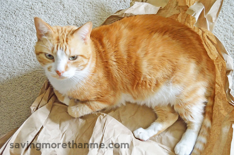 5 Helpful Props For Indoor Cat Photos [ad] savingmorethanme.com
