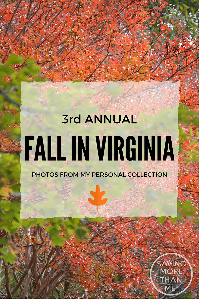 Third Annual Fall In Virginia Photos