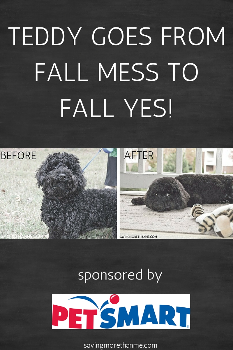 The Dog Groomer Takes Teddy From Fall Mess To Fall Yes!