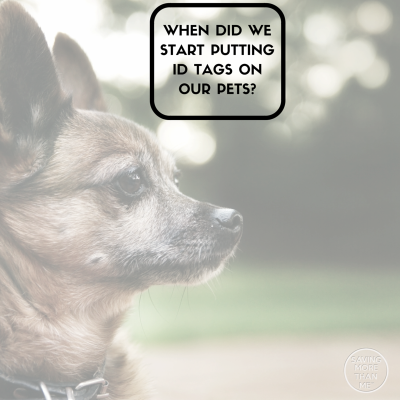 When Did We Start Putting ID Tags On Our Pets?