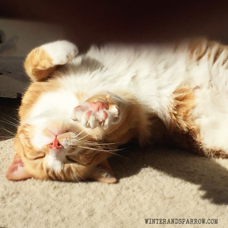 5 Jobs Cats Would Be Good At (If The Humans Didn't Get In The Way) @morrisapproved #ad winterandsparrow.com