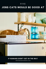 5 Jobs Cats Would Be Good At (If The Humans Didn't Get In The Way) @morrisapproved #ad