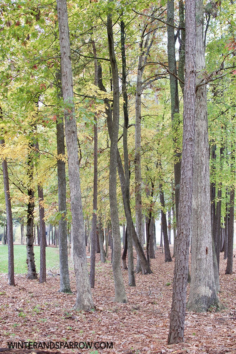 Fifth Annual Fall In Virginia Photos With Two Free Downloads #FallInVA winterandsparrow.com