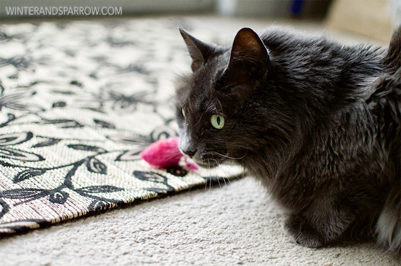 3 Ways You Can Help Senior Pets (Including Your Senior Feline Or Canine) #HillsTransformingLives @HillsPet #ad winterandsparrow.com